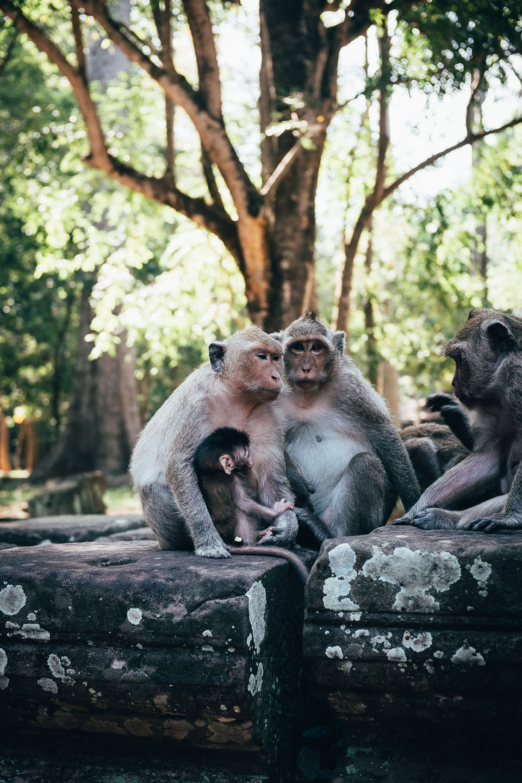 2019-foto-kambodscha©floehlich00040