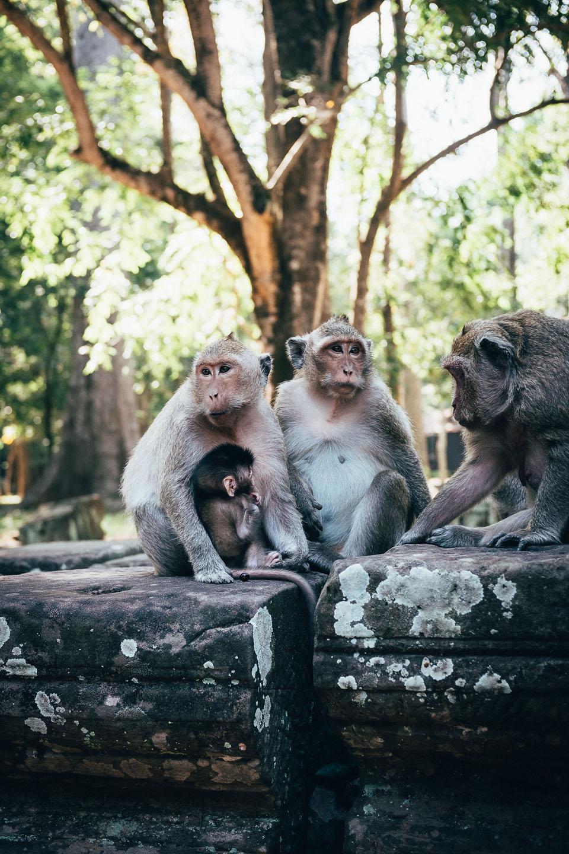 2019-foto-kambodscha©floehlich00041