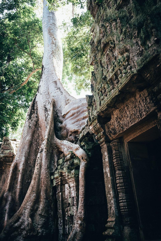 2019-foto-kambodscha©floehlich00043