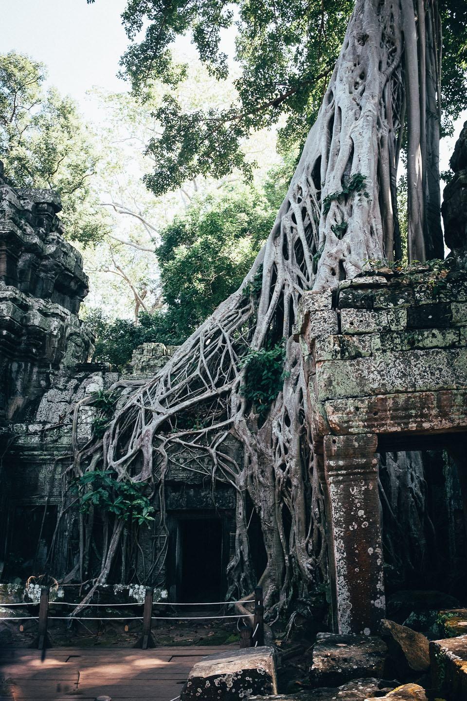 2019-foto-kambodscha©floehlich00044
