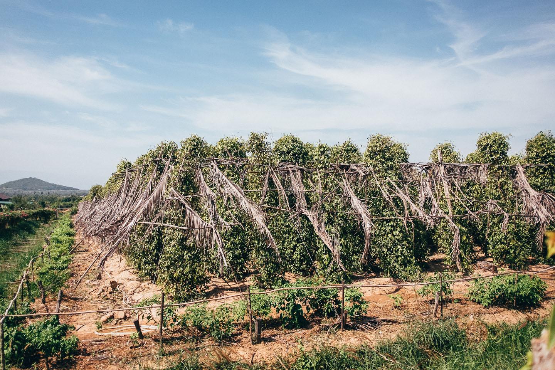2019-foto-kambodscha©floehlich00091